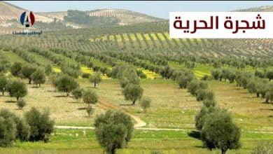 Photo of شجرة الحرية في الشمال السوري المحرر